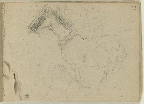 Cheval, de profil, vers la gauche