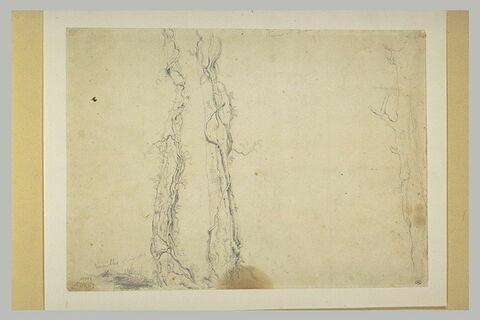 Trois troncs d'arbres envahis de lierre