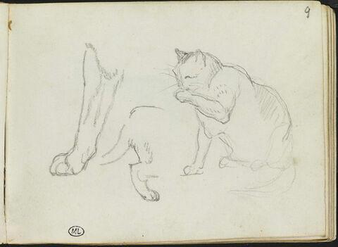 Croquis d'un chat et de deux pattes de chat