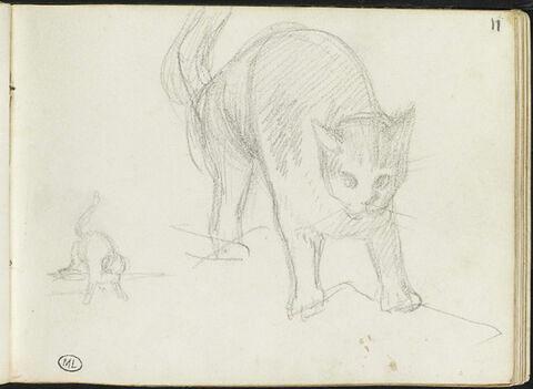 Croquis de deux chats