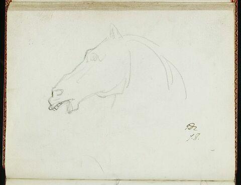 Tête de cheval, de profil à gauche