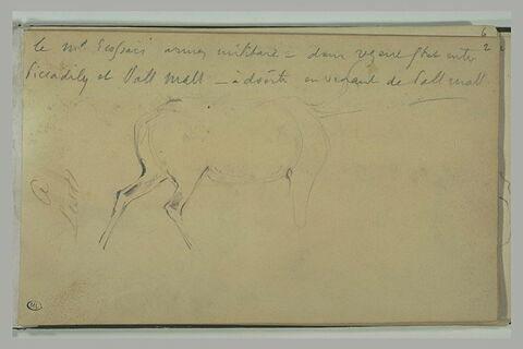 Annotations manuscrites, et corps d'un cervidé
