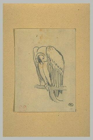 Etude de vautour