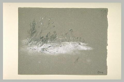 Graminées se détachant sur un terrain enneigé