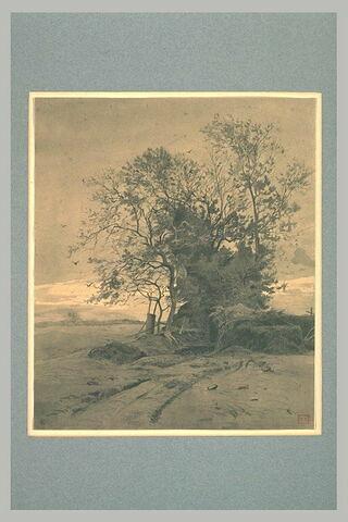 Bosquet d'arbres au milieu des champs