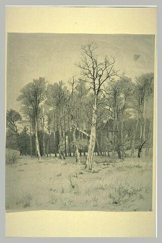 Bois en hiver, les arbres dépouillés de leurs feuilles