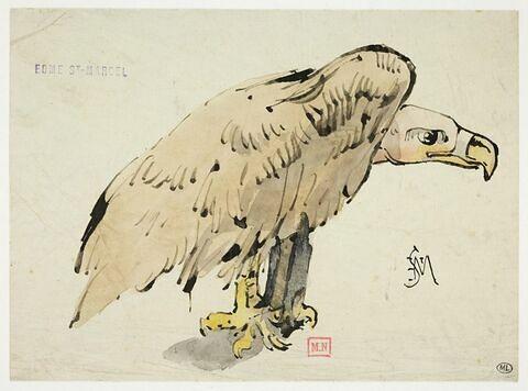 Oiseau de proie perché : vautour