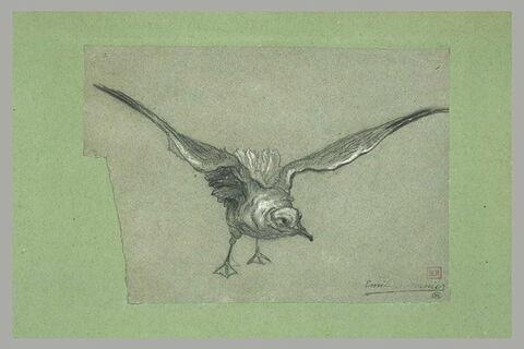 Oiseau aux ailes déployées