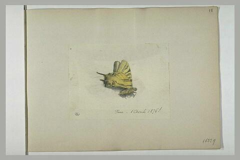 Papillon et insecte
