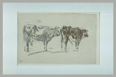 Deux vaches se suivant