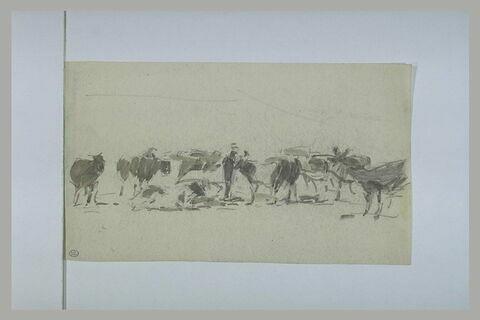 Homme conduisant un troupeau bovin
