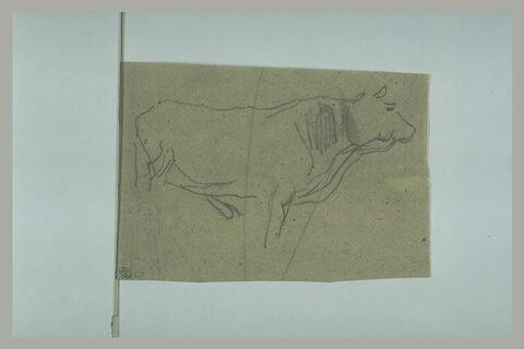 Vache tournée à droite