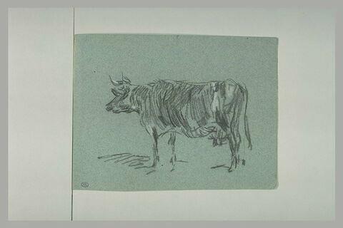 Vache tournée à gauche