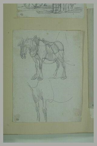 Cheval de trait ; avant-train d'un cheval
