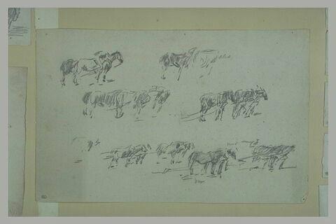 Etudes de chevaux tirant une charrue