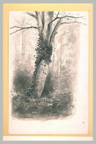 Arbre en partie couvert de lierre, dans un bois