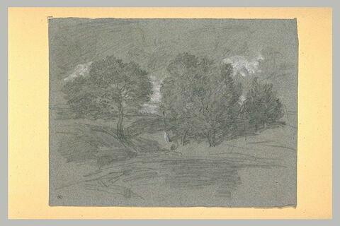 Etang entouré d'arbres