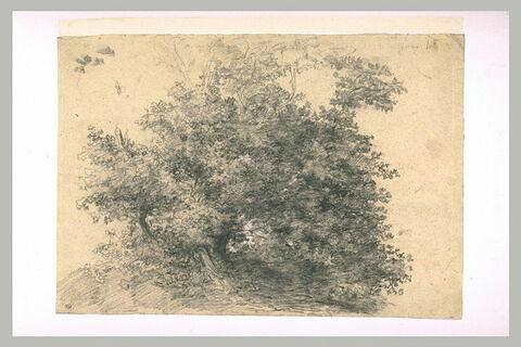 Bouquet d'arbres