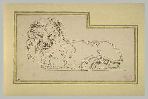Lion couché, le corps vu de profil, la tête vue de face