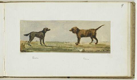 Deux chiens, face à face, dans la campagne