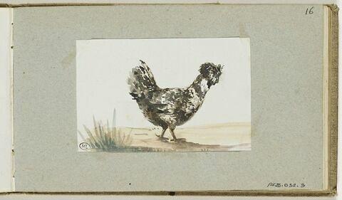 Une poule dans la campagne
