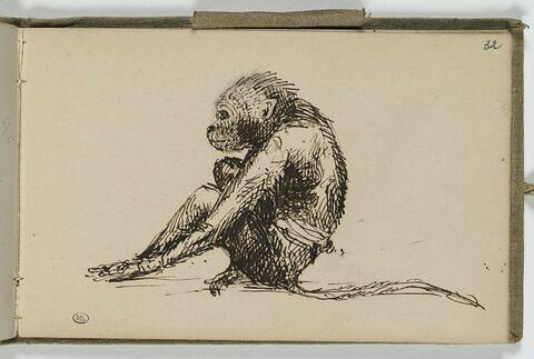 Etude d'un singe