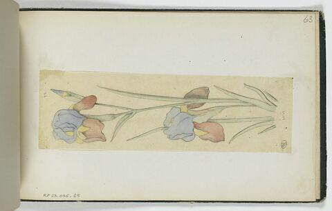 Ornement végétal : Iris