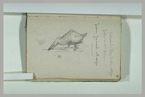 Canard et annotations manuscrites
