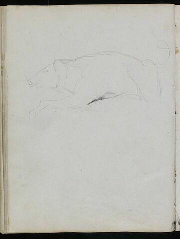 Sanglier, de profil à gauche