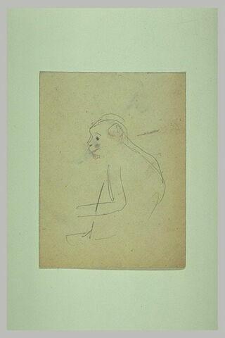 Croquis d'un singe