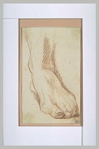 Etude d'un pied gauche, de face