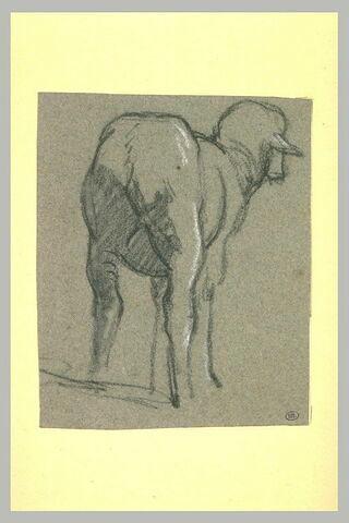 Mouton, de dos
