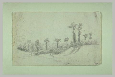 Paysage avec une rangée d'arbres