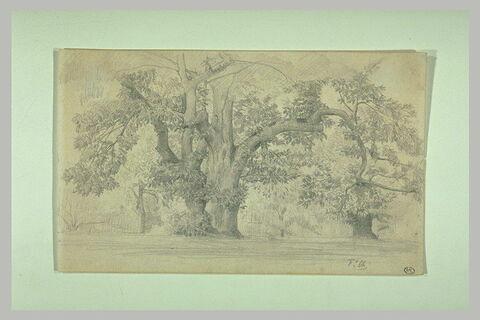 Paysage avec deux grands arbres au centre