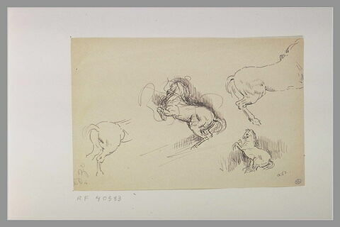 Quatre croquis de chevaux dont deux d'un cheval cabré