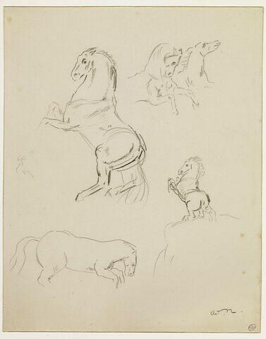 Plusieurs croquis de chevaux ; cheval cabré sur une cime