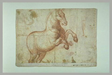 Etude d'un cheval cabré