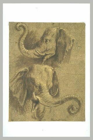 Deux études de têtes d'éléphants
