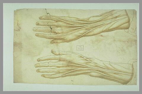 Etude de deux mains écorchées