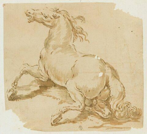 Un cheval abattu sur les quatre jambes