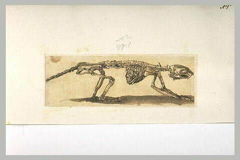 Un squelette de quadrupède dressé sur ses pattes