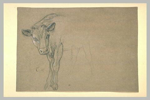 Etude partielle de vache