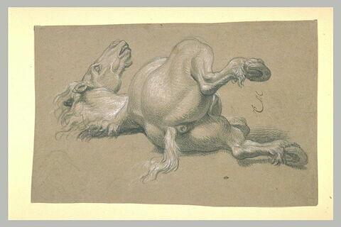 Etude de cheval abattu, renversé sur le dos