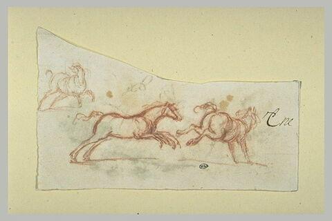 Trois chevaux en mouvement
