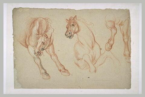 Etudes partielles de trois chevaux