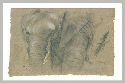 Etude d'une tête d'éléphant