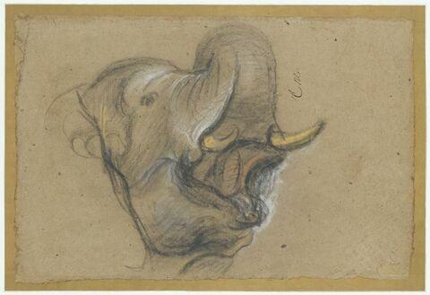 Tête d'un éléphant barissant