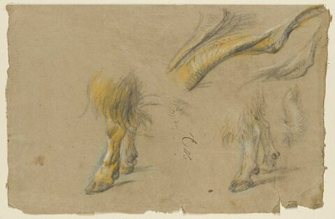 Etude de pattes de bélier et une étude indéterminée