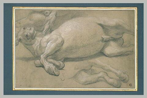 Cheval mort ou blessé