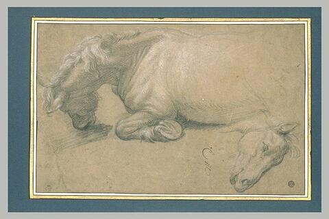 Cheval couché ; tête de cheval